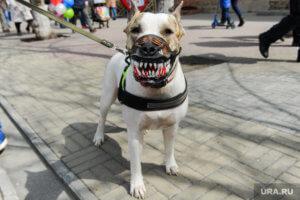 Скоро будут штрафовать за выгул опасных пород собак без намордника